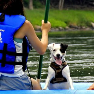 cute dog in raft on Delaware River Indian Head Canoeing Rafting Kayaking Tubing Delaware River
